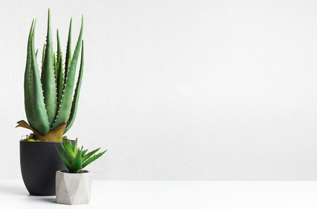 Aloe vera and mini succulent plant in pots over light wall with copy space