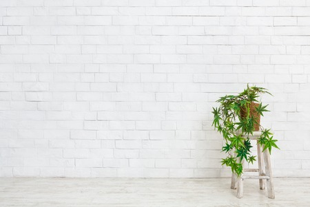 Indoor green plants in flowerpots on table at white brick wall background. Eco interior design concept