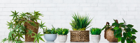 Different house plants in pots on white table at white brick wall background. Pot flowers hobby concept, panorama