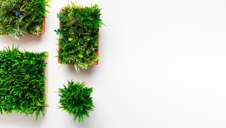 Grass plants in different pots on white background with copy space, top view