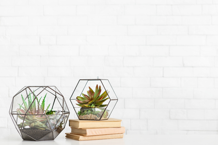 Florariums vases with succulent plants and stack of books on table at white brick wall background