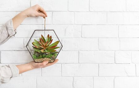 Womans hands holding mini glass florarium with plants at white brick wall background, copy space