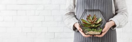 Woman holding mini succulent garden in geometric glass florarium vase at white brick wall, copy space. Gardening service concept, panorama