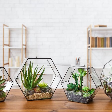 Several geometric florarium vases with succulent plants on wooden table at white brick wall background