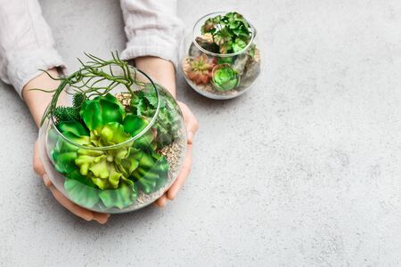 Womans hands holding mini succulent garden in glass florarium vase at concrete background, copy space. Mini garden concept