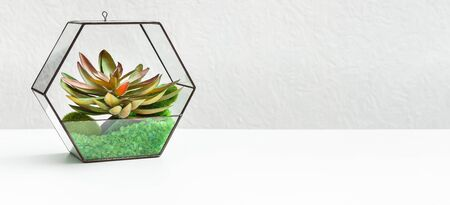 Small garden with succulent plants in glass florarium over grey wall, copy space. Home garden concept, panorama Reklamní fotografie