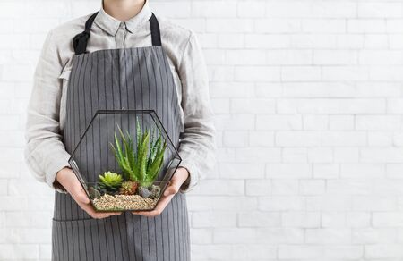 Woman holding mini succulent garden in geometric glass florarium vase at white brick wall, copy space. Gardening service concept