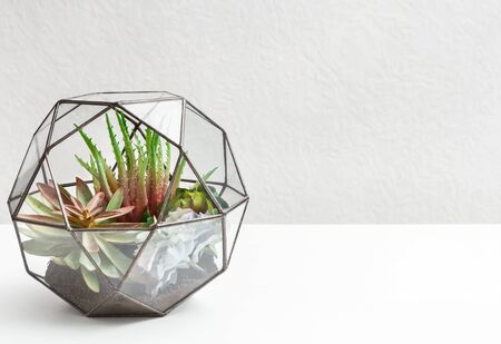 Mini garden with succulent plants in glass florarium over grey wall background, copy space.