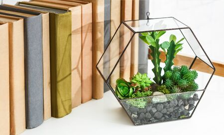 Florarium vase with succulent plants standing on book shelf.
