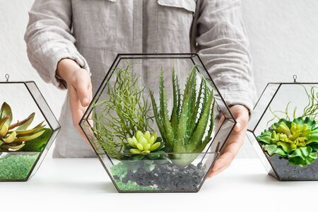Woman holding glass geometric florarium vase with mini succulent garden and two florarium vases at table. Professional florists service concept Reklamní fotografie