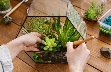 Woman transplanting succulent plants in glass florarium with various tools on table. Home gardening concept Stok Fotoğraf