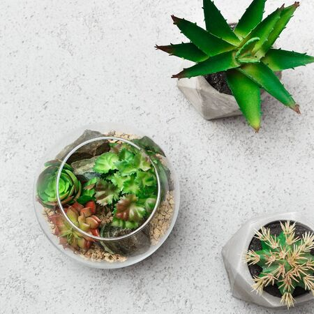 Glass florarium vases with succulent plants and small cactuses in pots on concrete background, top view. Green home decor concept