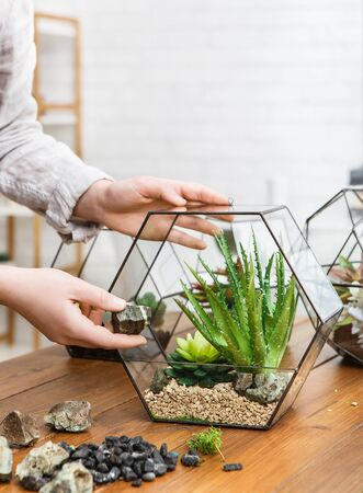 Woman holding glass florarium vase with succulent plants and moss stones on wooden table. Make your home garden concept Stok Fotoğraf