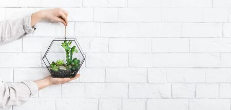 Womans hands holding mini glass geometric vase with plants at white brick wall background, copy space
