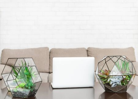 Glass florarium vases with succulent plants and laptop on table in living room, copy space