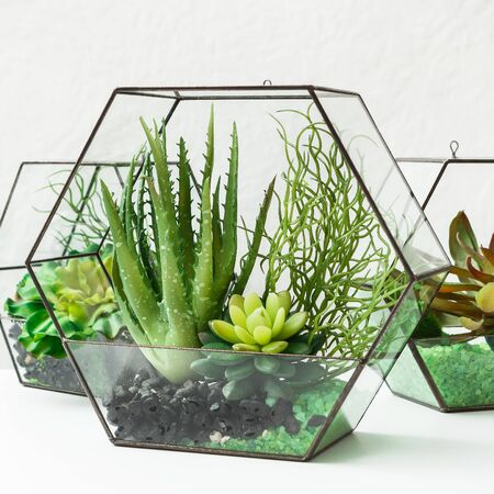 Succulent plants in glass florarium vases on table over grey wall. Home mini garden concept. Stock fotó