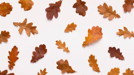 Concetto di autunno dorato. Disposizione piatta di foglie marroni di ghiande morte su sfondo bianco, panorama