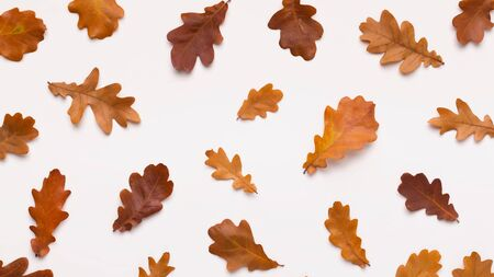 Golden autumn concept. Flat lay of dead acorn brown leaves on white background, panorama