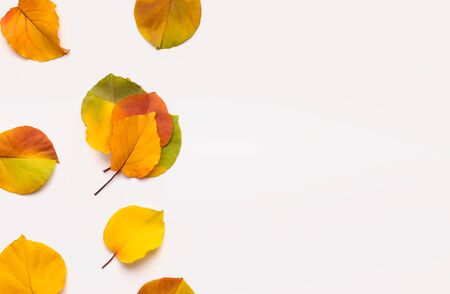 Creative frame of autumn colored fallen linden leaves on white   with copy space for promotion