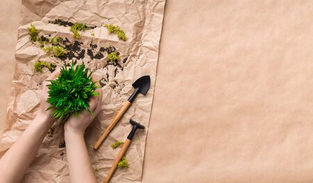 Transplanting plants concept. Woman planting flower in pot on craft paper background, top view