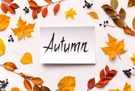 Hello autumn concept. Bright background with dead leaves on white background with text on paper