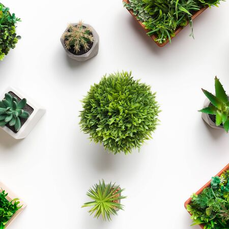 Pattern of artificial succulent, cacti and grassy plants in various pots on white background, top view, crop