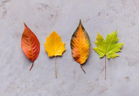 Composizione luminosa e creativa di diverse foglie cadute autunnali colorate su grigio