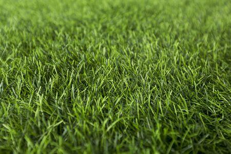 Fresh spring or summer wet grass in park, green background