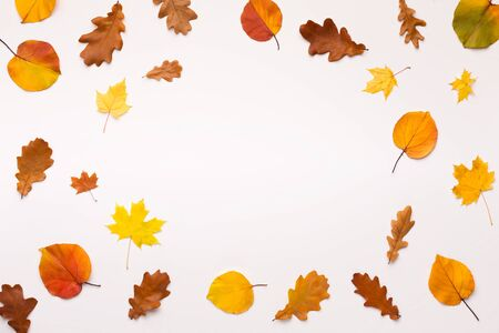 Amber autumn concept. Colored fallen leaves form round frame on white background with copy space