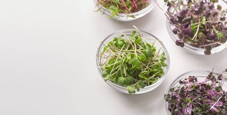 Organic plant microgreens for making detox salads on white background, panorama, copy space