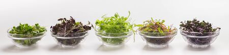 Collage of different fresh baby seeds or microgreens for healthy nutrition on white background, wide panorama