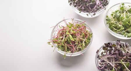 Addition to fresh and healthy salads. Microgreens in glass plates on white background, panorama, copy space
