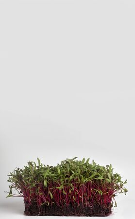 Eco and natural. Bright sprouted seeds on white background, vertical panorama, copy space