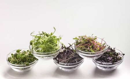 Assortment of fresh and healthy microgreens in plates on white background, copy space