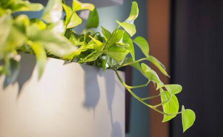 Close up of cafe living plant decoration, interior element, copy space 版權商用圖片