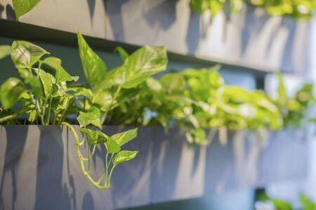 Close up of beautiful artificial plants in wooden shelves. Home or cafe interior design idea 版權商用圖片