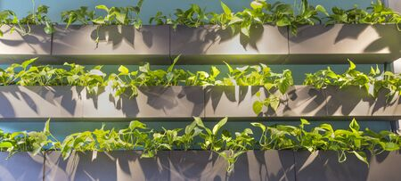 Eco green. Natural plants in wooden shelves for modern interiors design, panorama