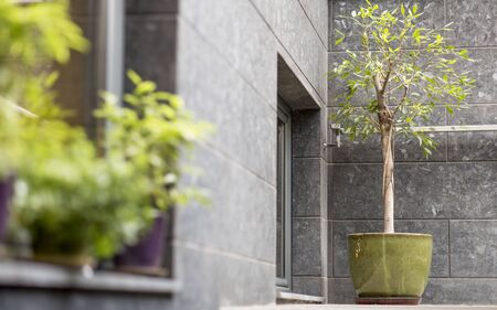 Small decorative tree in pot outdoor, cafe exterior design, copy space