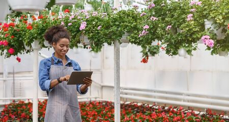 Greenhouse climate control. Smiling african american girl stands among plantation bright red potted flowers and uses tablet, panorama, free space