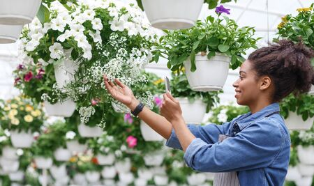 Comfortable work with smart technologies. African american girl care and takes photos of flowers in greenhouse, panorama Stockfoto