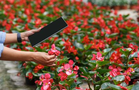 Modern plant growing. Farmer african american girl with digital tablet checks flowers in greenhouse, cropped