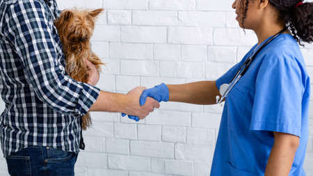 Unrecognizable client with cute little dog shaking hands with experienced veterinarian doc at clinic, panorama Stock fotó