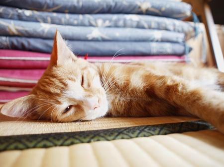 kittï½™ in the tatami room Stock Photo - 11601630