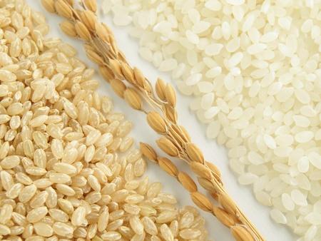 arroz chino: arroz japonica Foto de archivo