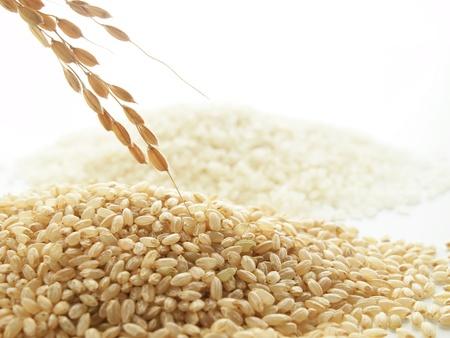 japonica rice Stock Photo