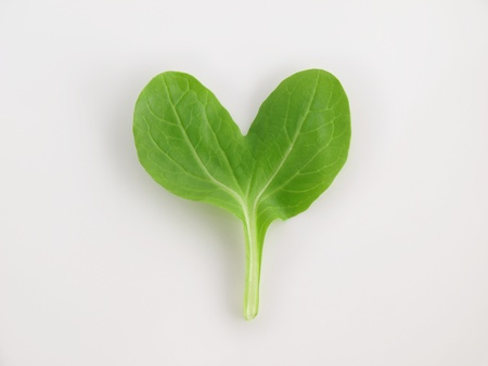 edible leaves: heart pino green