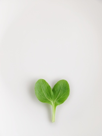 baby spinach: heart pino green