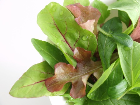 edible leaves: baby leaf salad