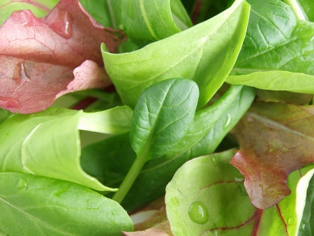 baby spinach: baby leaf salad