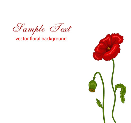florescence: Vector illustration of red poppies on white background Illustration